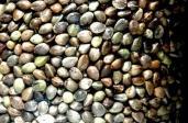 Os super benefícios dos superalimentos - Sementes de Cânhamo