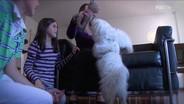 Cambio Cane 1x04 - Milo e Stich (famiglia Paron)
